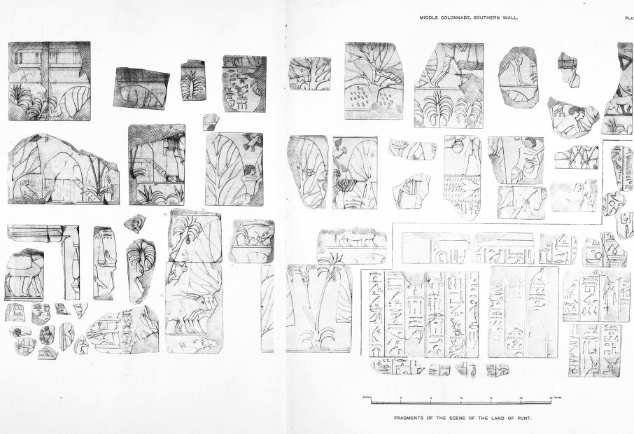 Benarkah Bengkulu Tanah Punt? Spt Cerita Kuil Hatshepsut 11