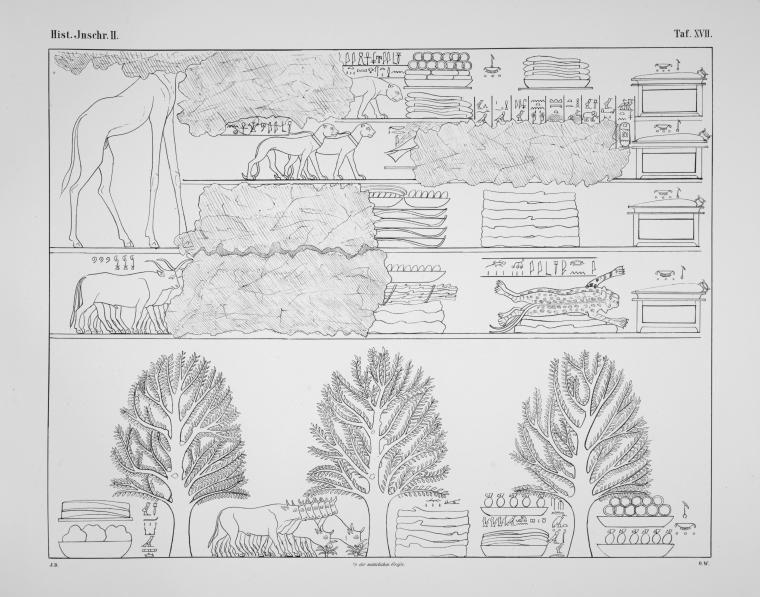 Benarkah Bengkulu Tanah Punt? Spt Cerita Kuil Hatshepsut 19