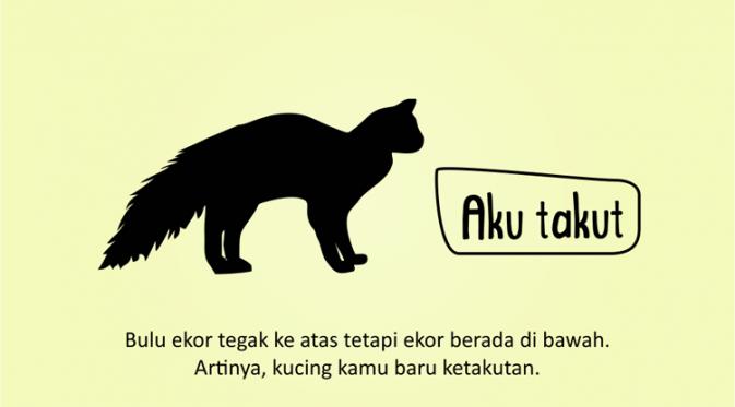 Kenali Suasana Hati Kucing dari Gerak Ekornya 4
