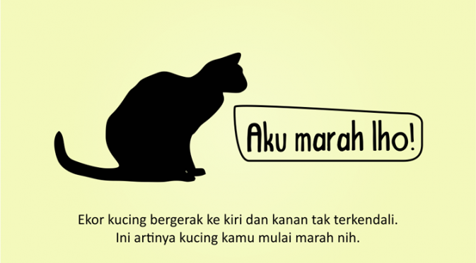 Kenali Suasana Hati Kucing dari Gerak Ekornya 8
