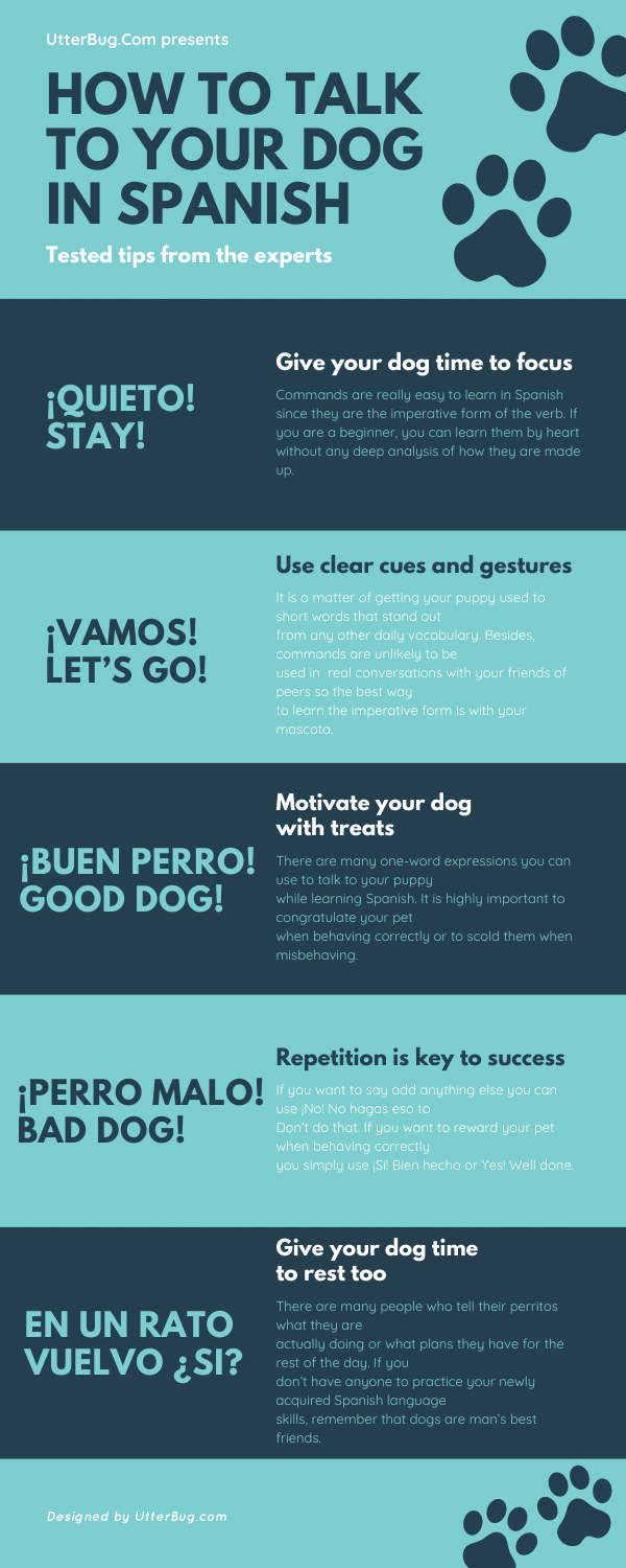 Infographics of How To Talk To Your Dog In Spanish