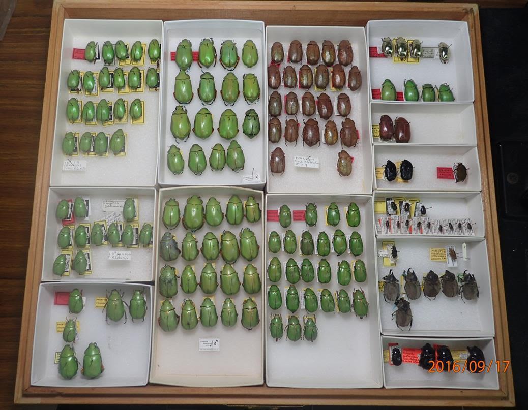 La famosa colección entomológica de la UVG y su director Jack C. Schuster