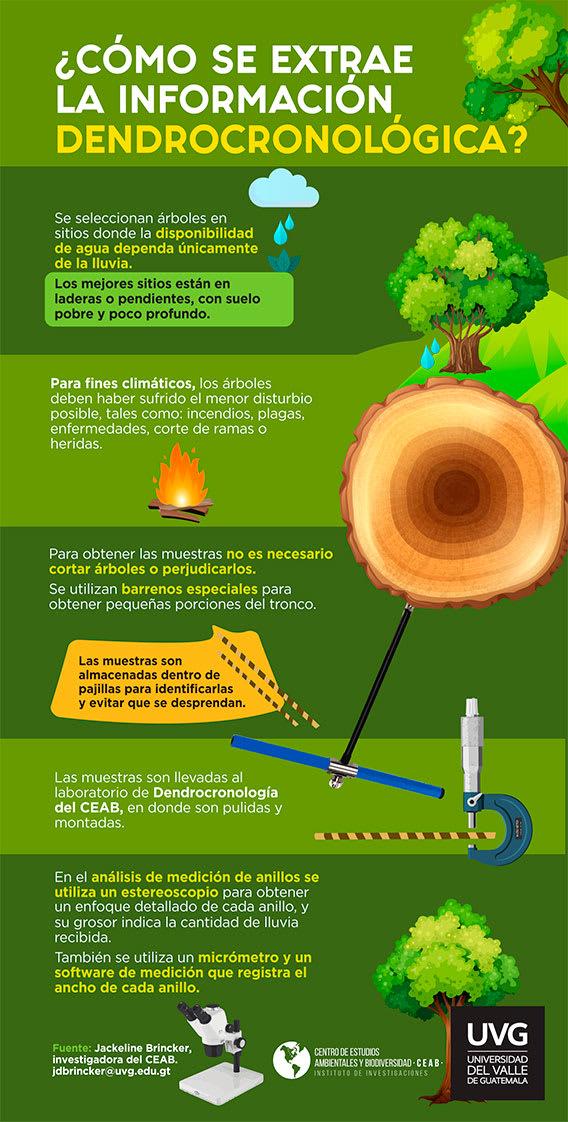 Dendrocronología: Cuando los árboles nos cuentan su historia