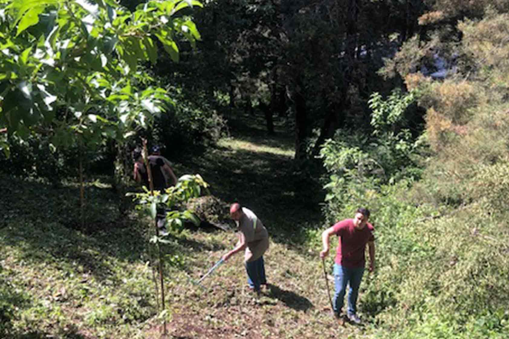 UVG promueve un plan de reforestación - foto4