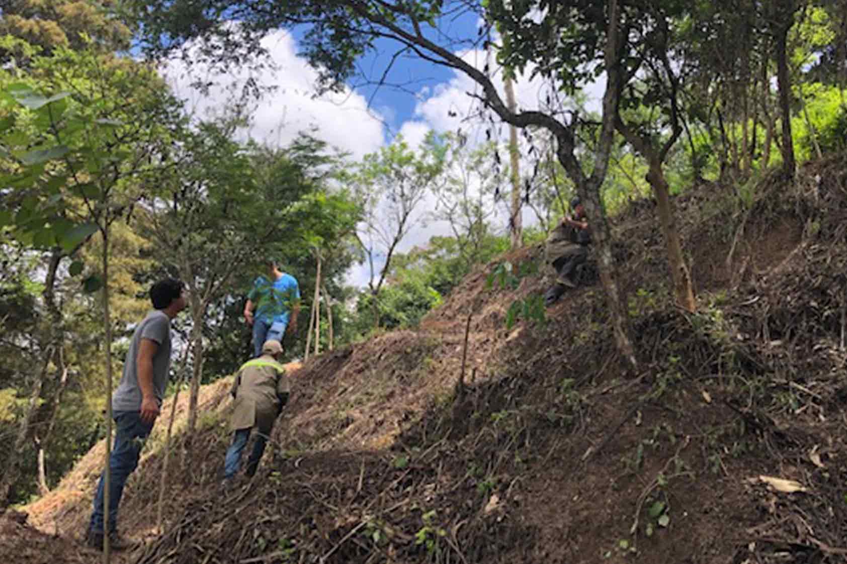 UVG promueve un plan de reforestación - foto6