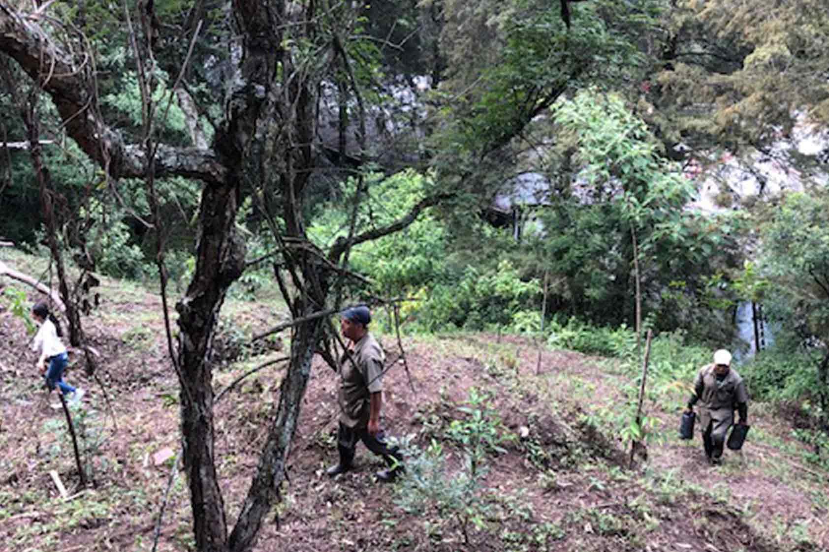 UVG promueve un plan de reforestación -foto 1