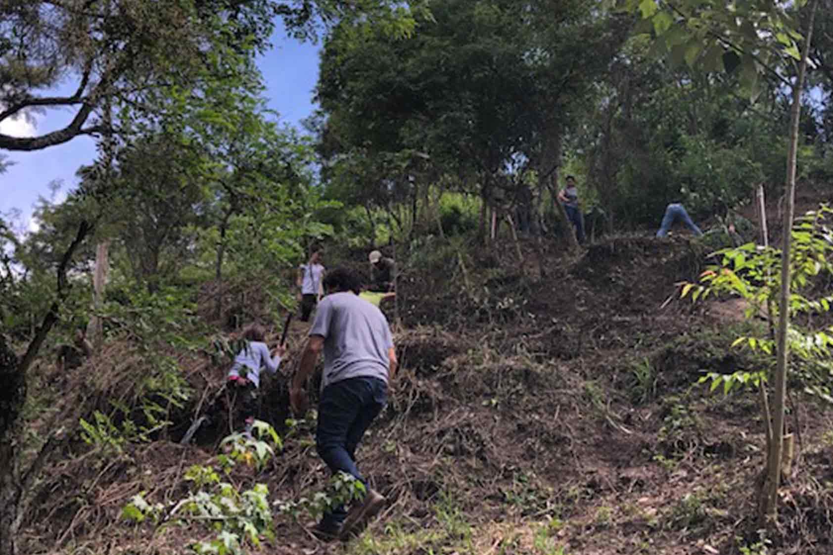UVG promueve un plan de reforestación - foto11