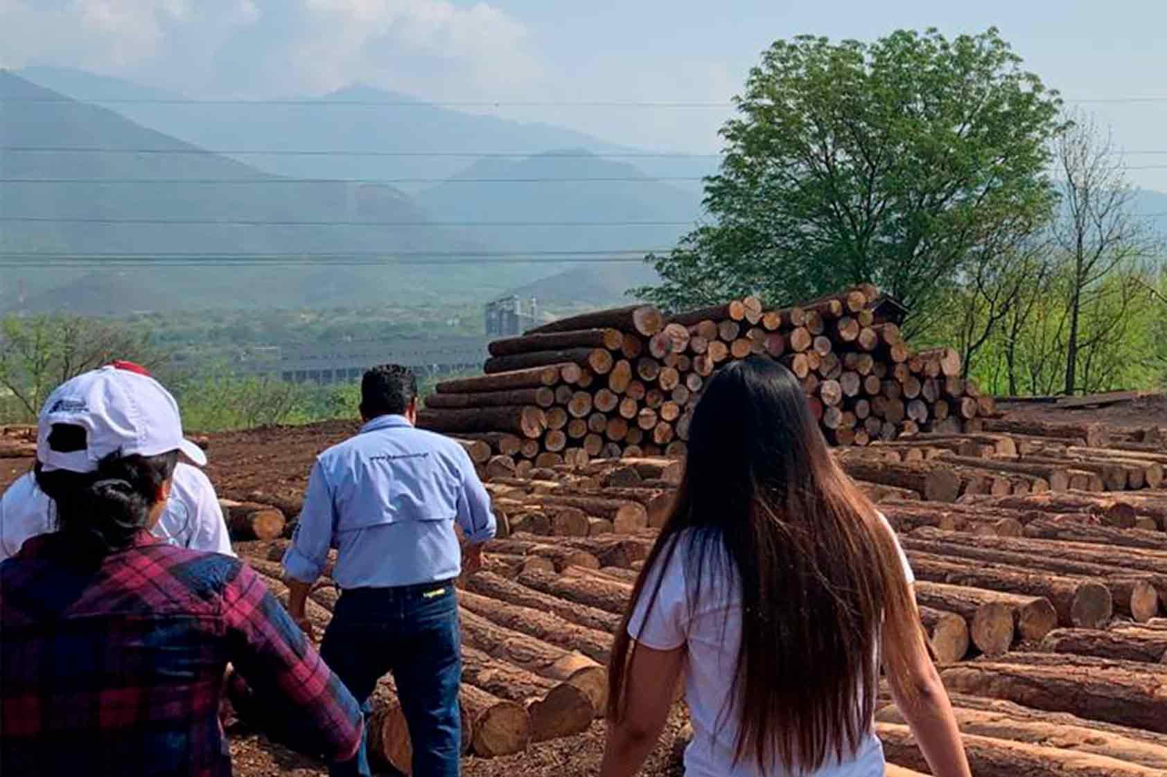 ¿Cómo se trata la madera? Nuestros estudiantes te lo cuentan