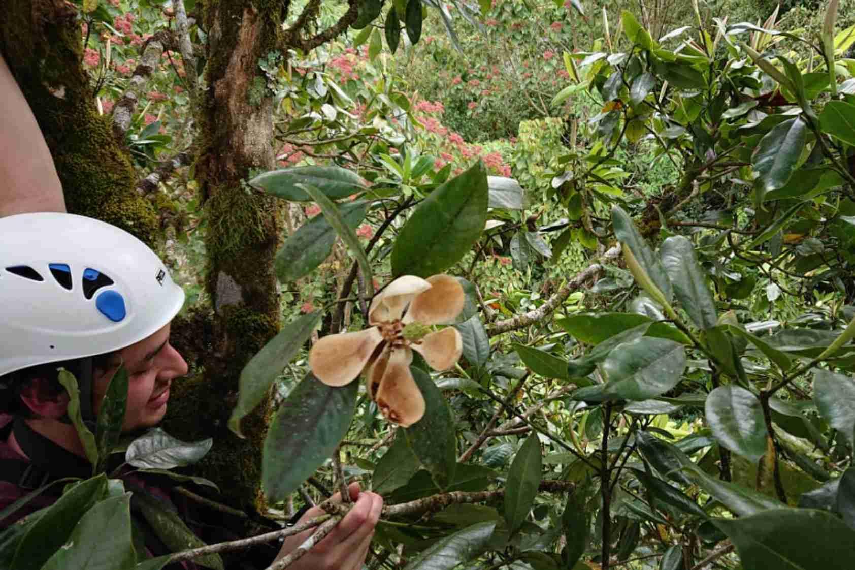 La aventura detrás del descubrimiento de la Magnolia Poqomchi