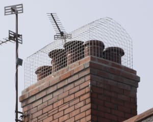 Prevent gulls nesting on a chimney with a chimney cage – Vale Pest