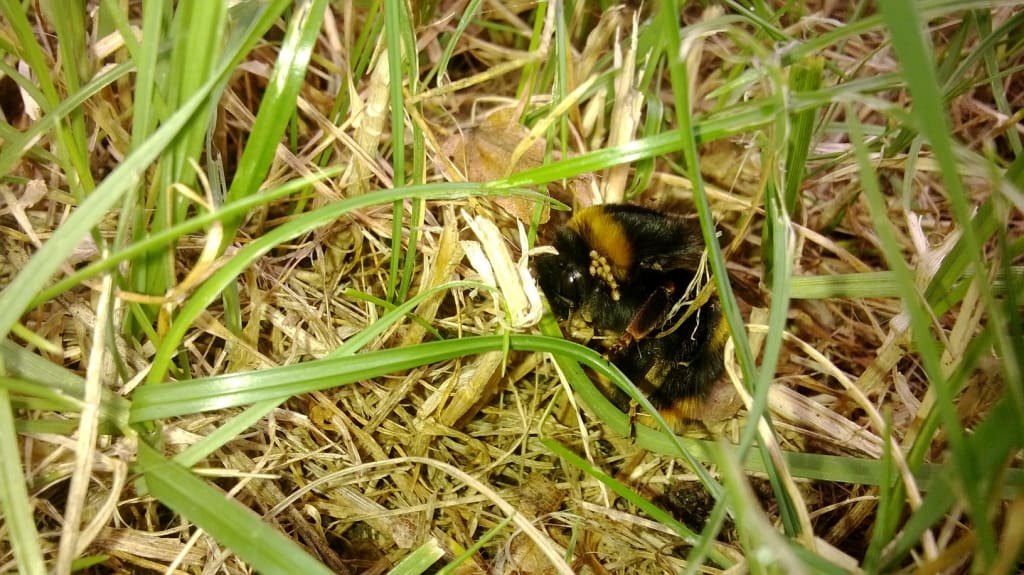 Bumble Bee under attack - Barry