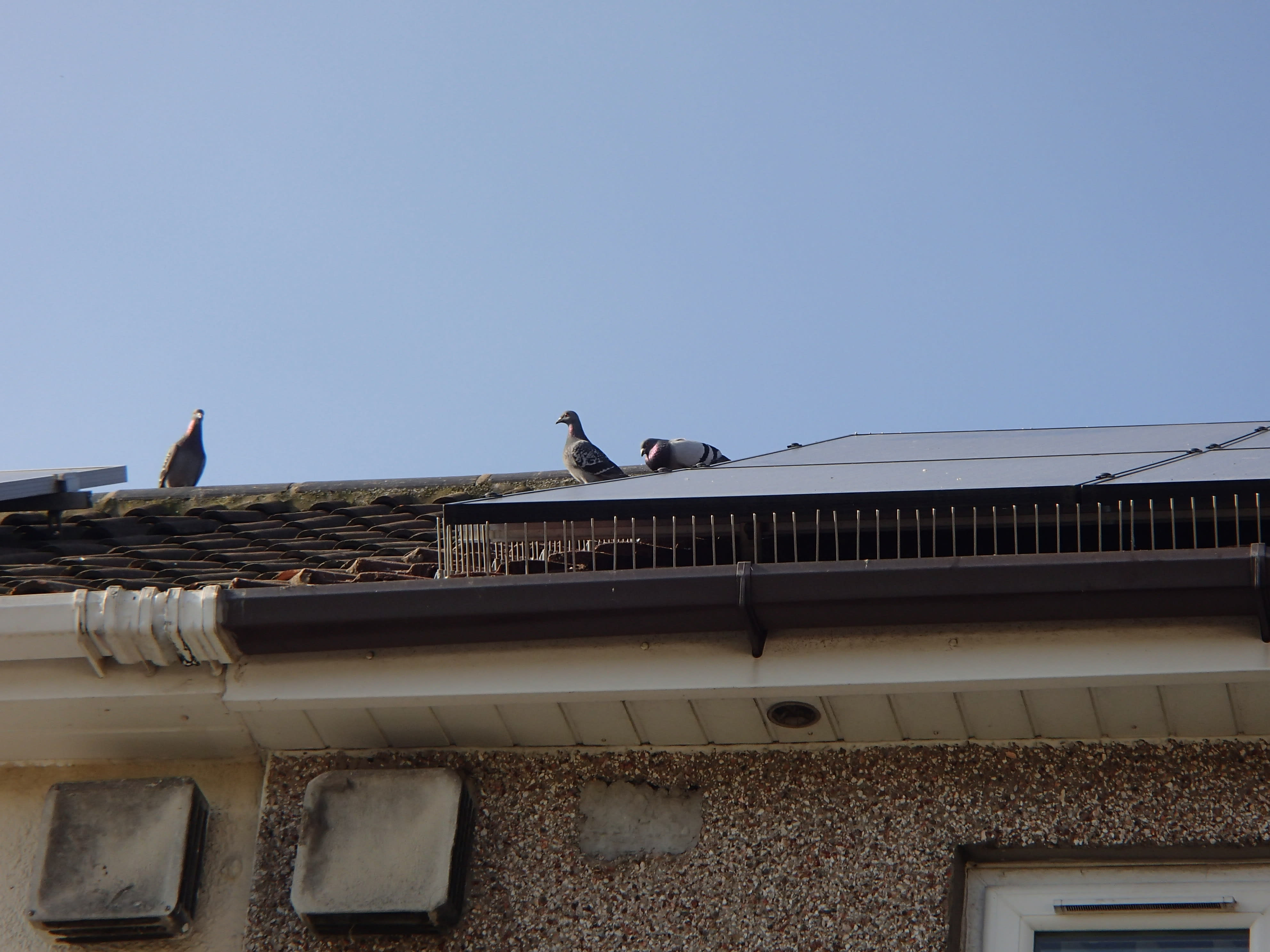 Solar Panel Pigeon Spikes_7