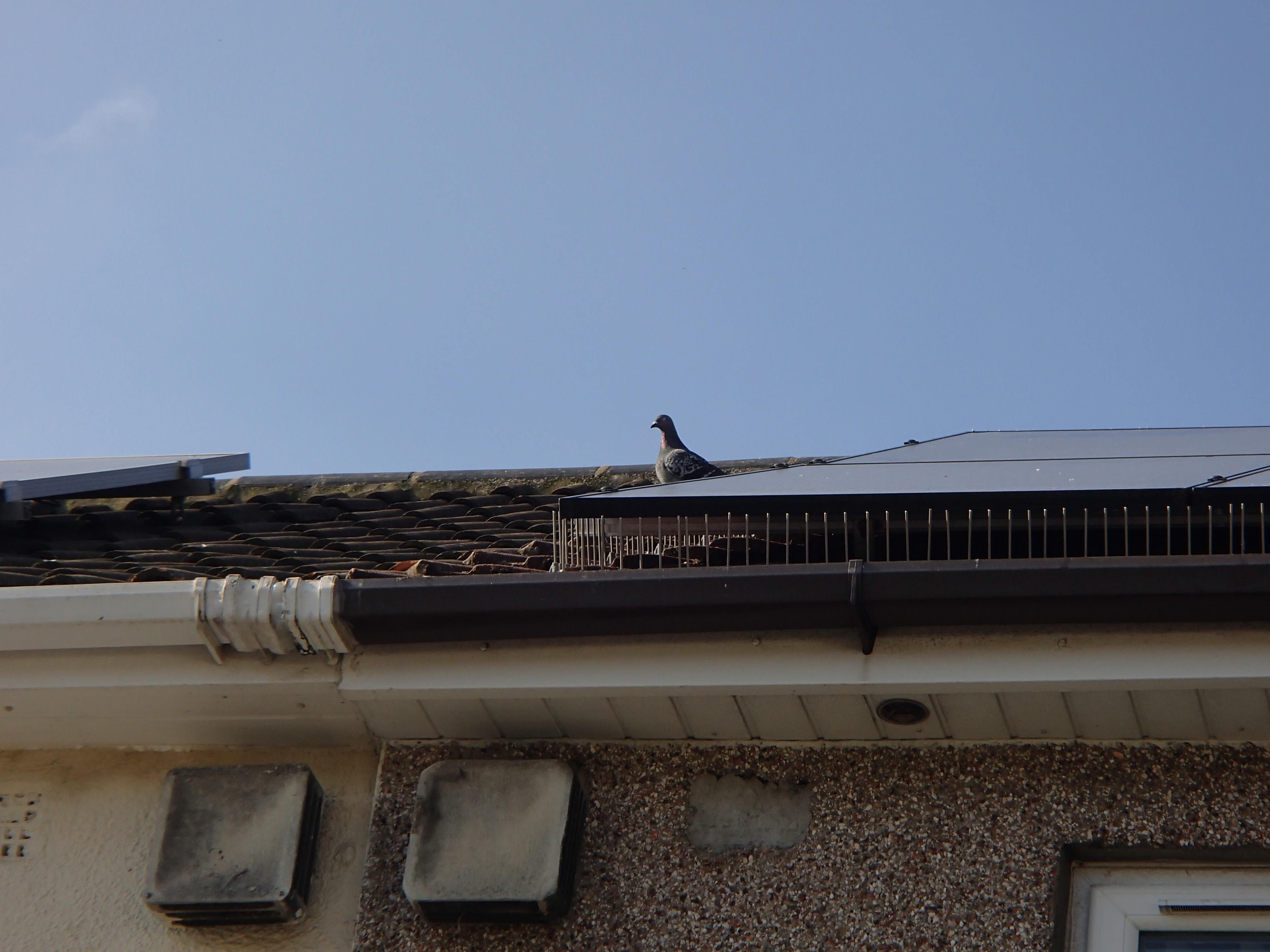 Solar Panel Pigeon Spikes_6