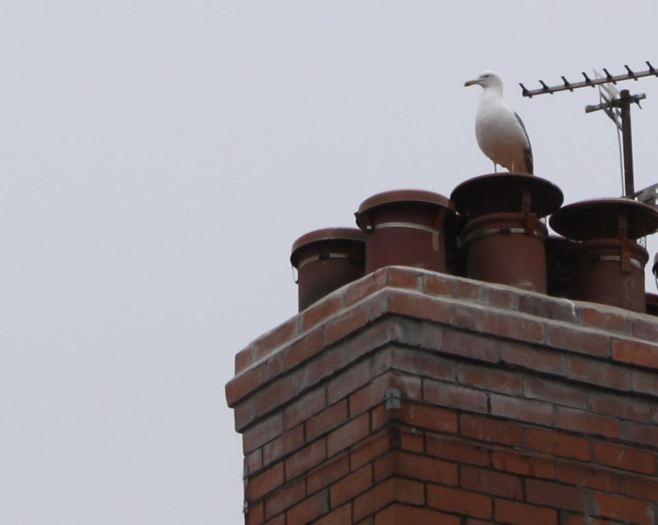 prevent gulls nesting on a chimney - Cardiff