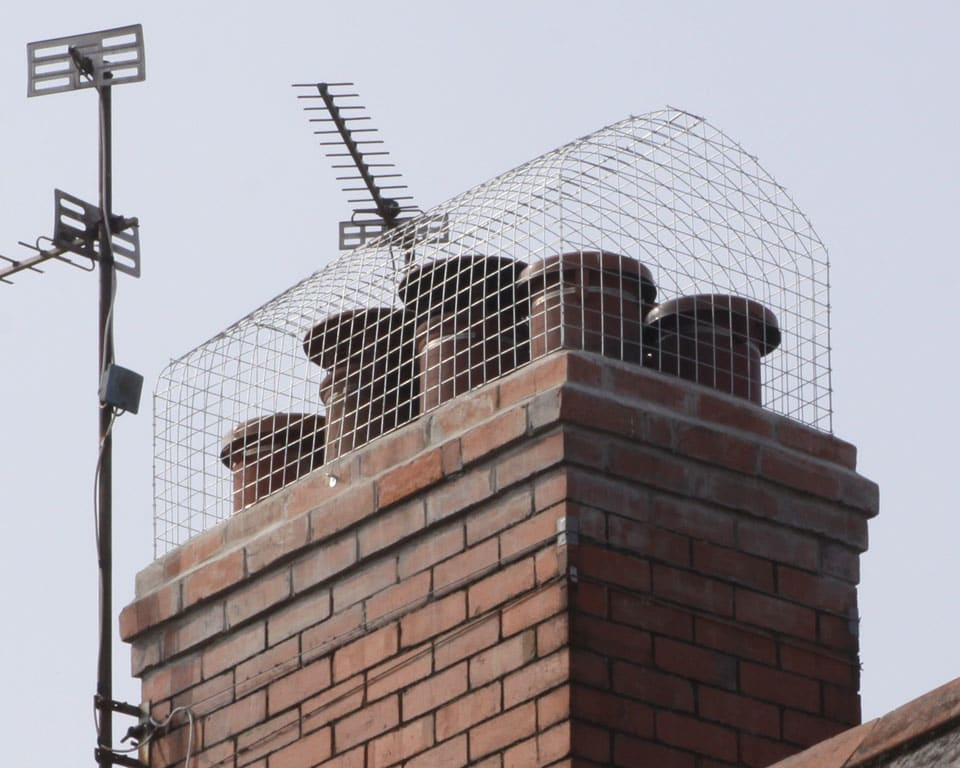 How to prevent gulls nesting on a chimney Cardiff