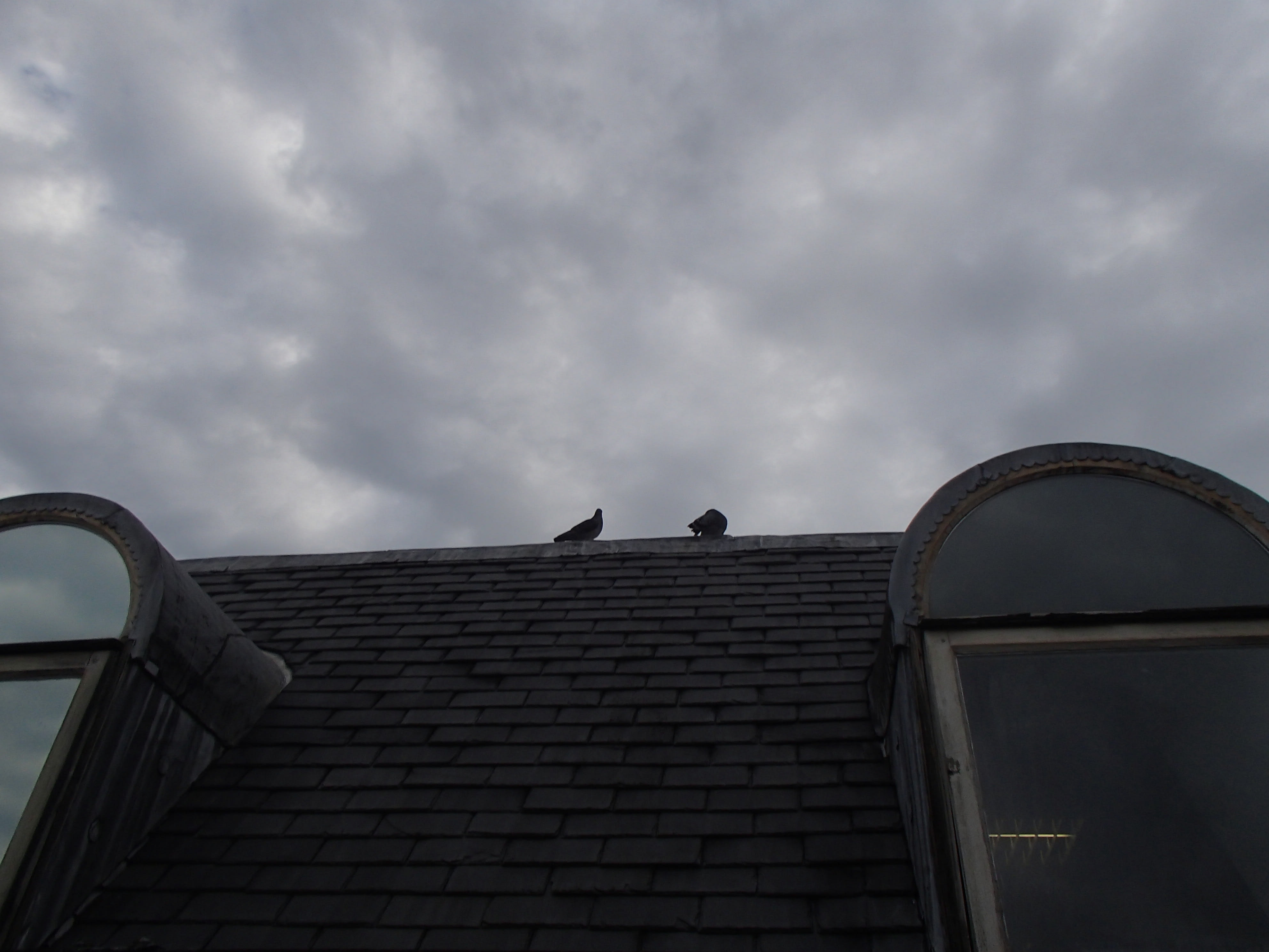 Pigeon Proofing 150916 – Roof ridge