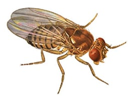Fruit fly control Cardiff South Wales