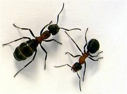 image of ants