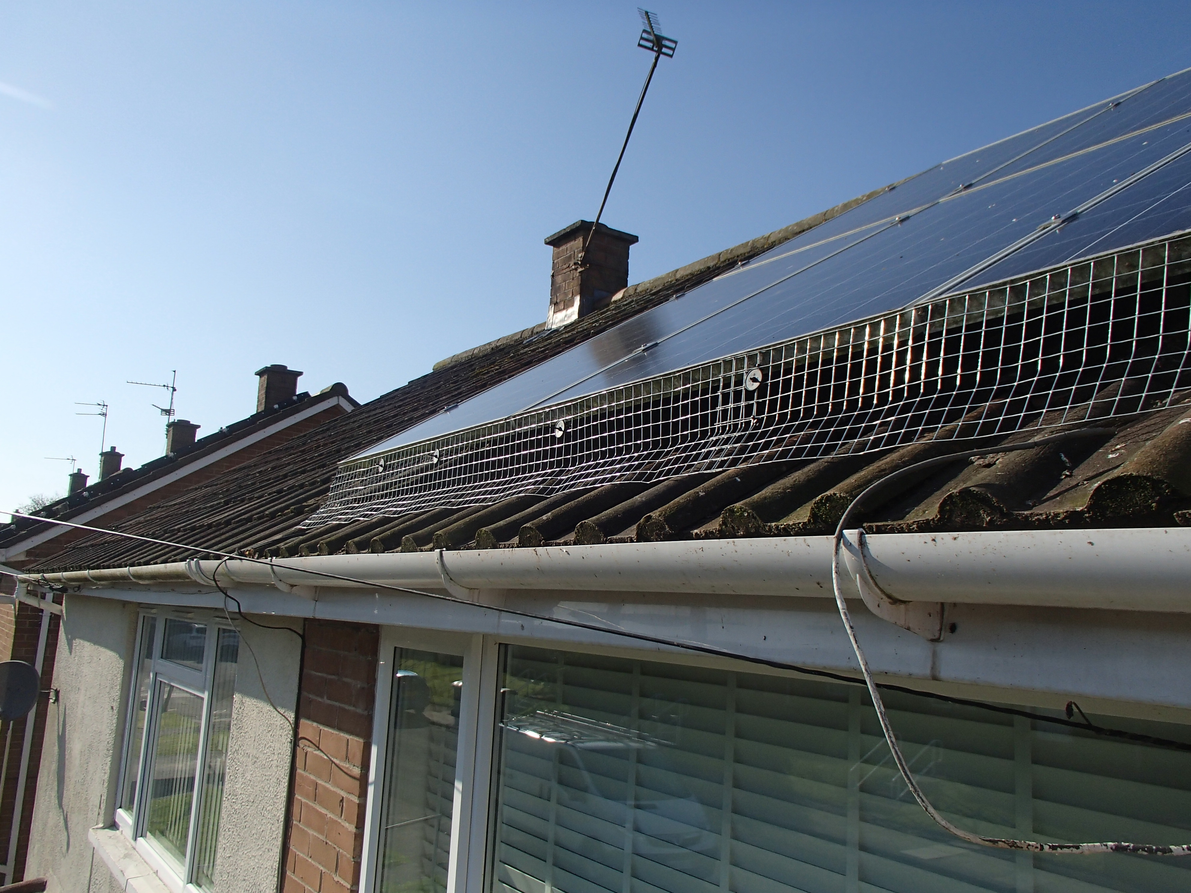 proofing solar panels from pigeons_4