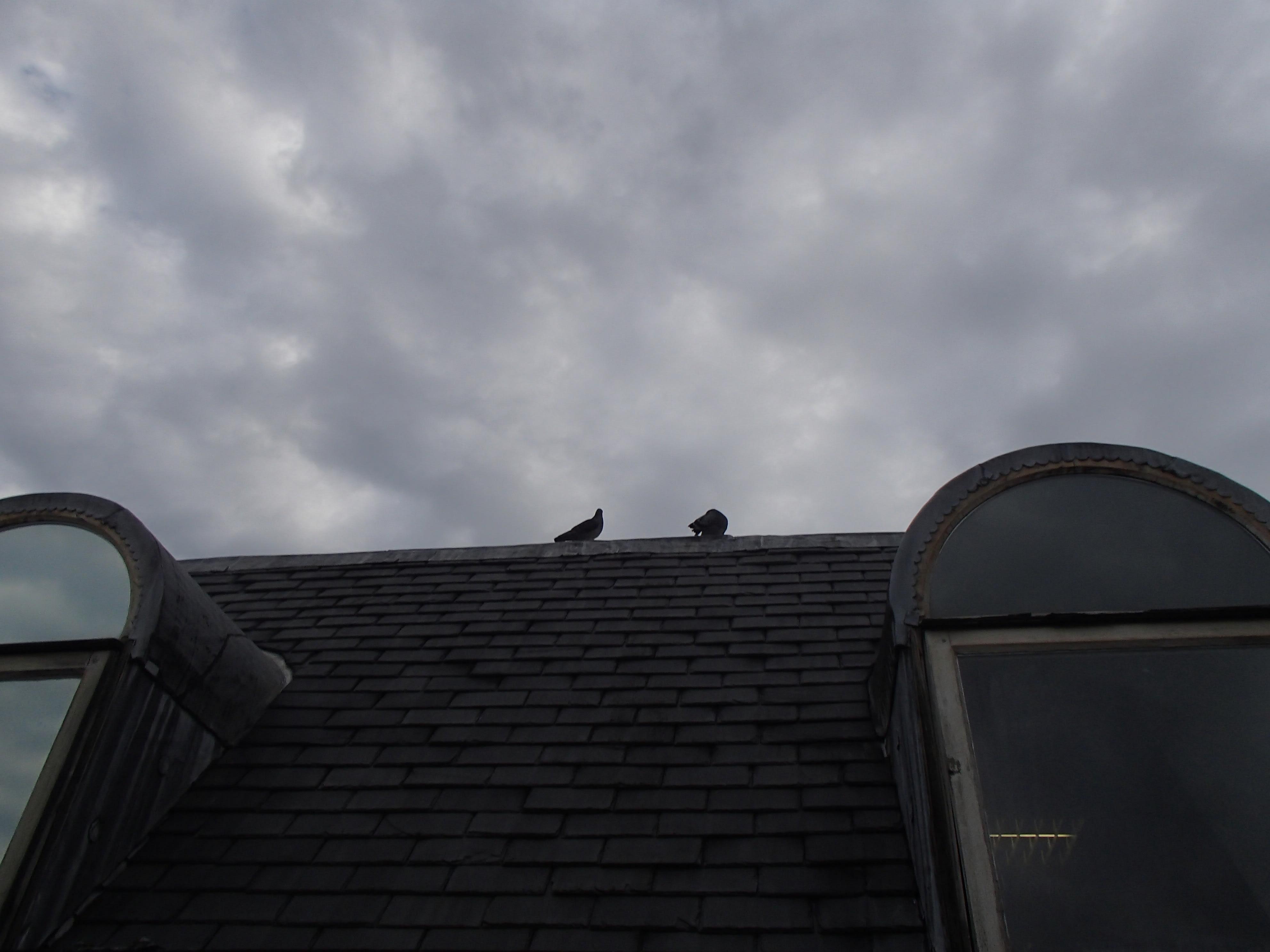 Pigeon Proofing 150916 – Roof ridge
