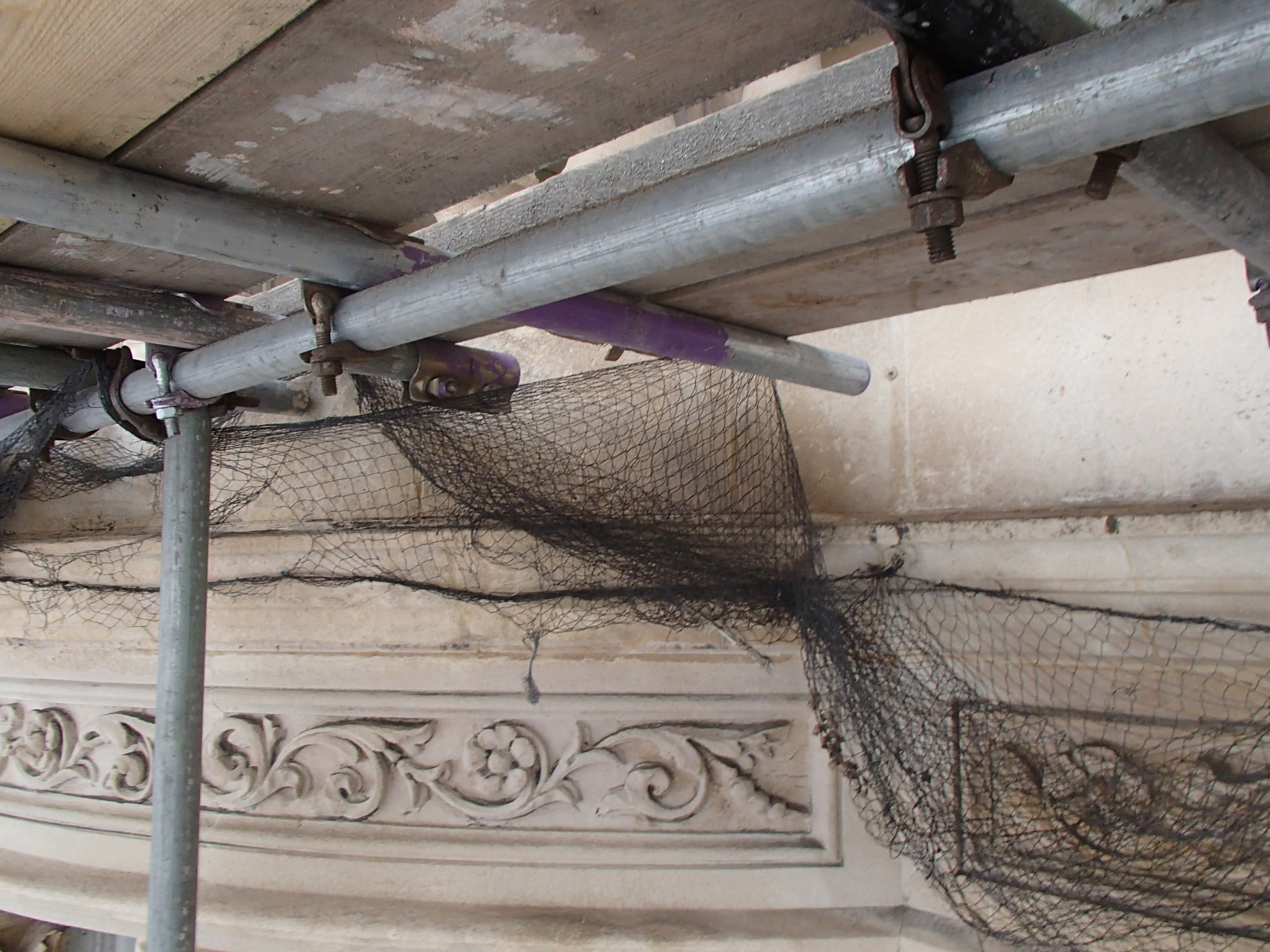 Pigeon Proofing 150916 – Rise 6