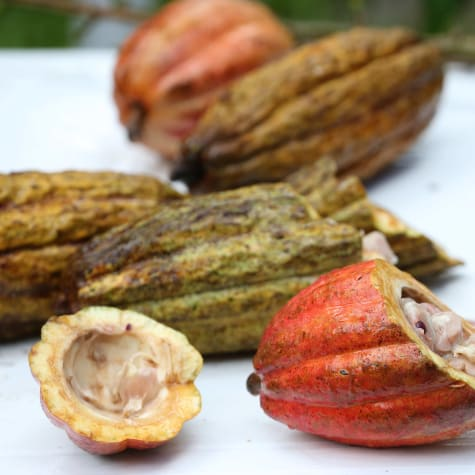 The AMAZCACAO Project & the Quest for the Next Grand Cru
