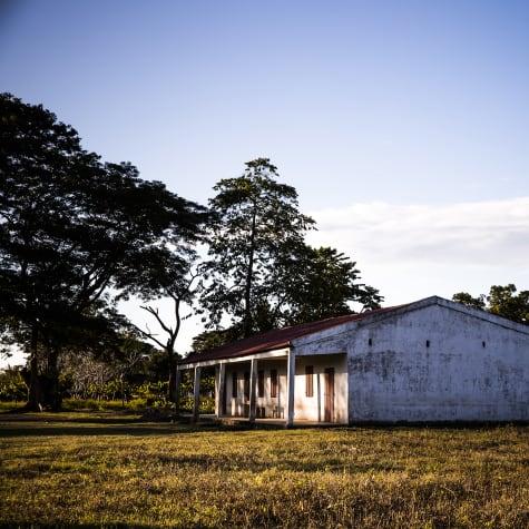 Plantation Millot Madagacar