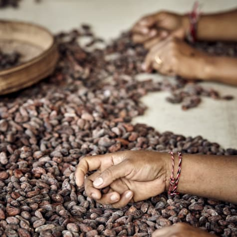 Valrhona.com-Our Expertises-The best in selecting and growing cocoa
