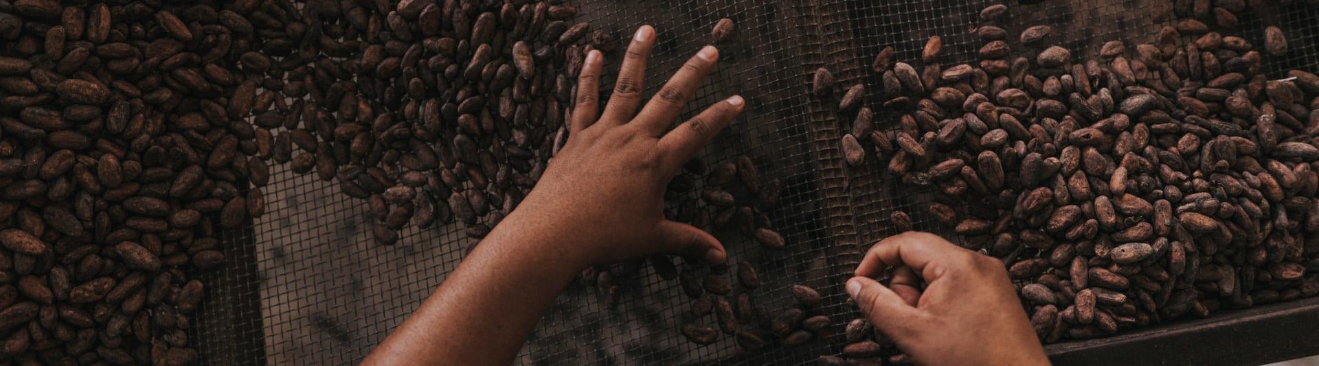 valrhona.com-live-long-cacao