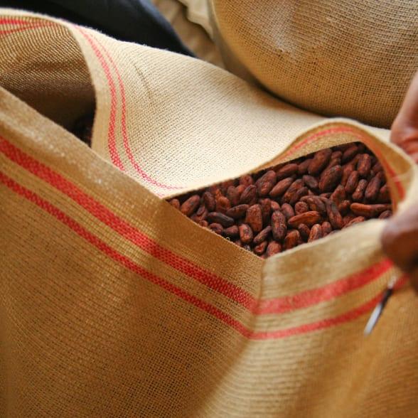 Valrhona.com-live-long-cacao-exemple-traçabilité