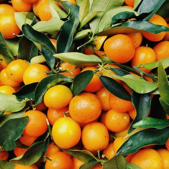 Valrhona.com-trends-book-all-about-orange