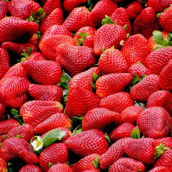 Valrhona.com-Rund um die Erdbeere