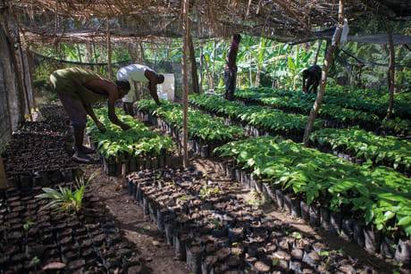 valrhona.asia-news-cocoa-forest