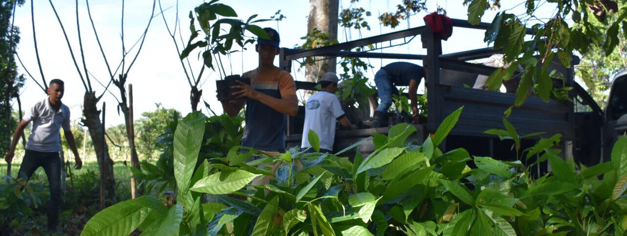 Cacao San José