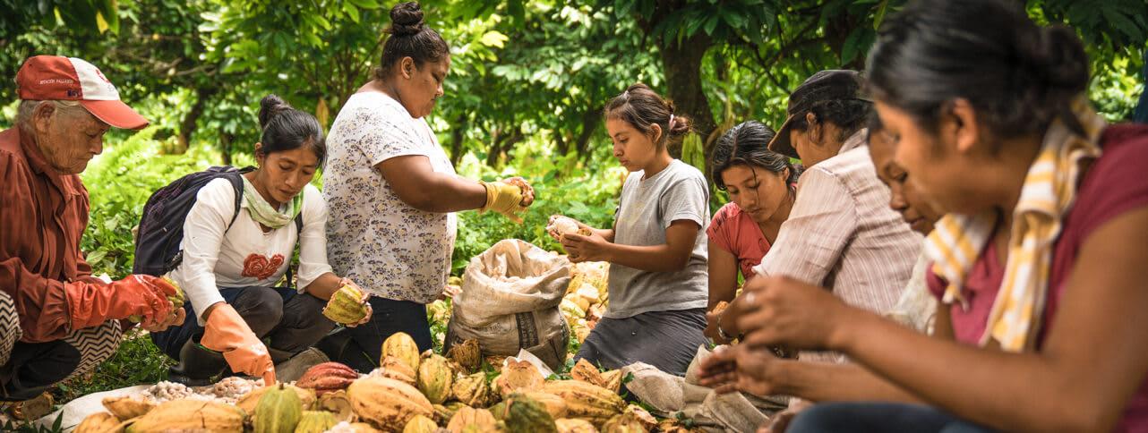 Maya Mountain Cacao