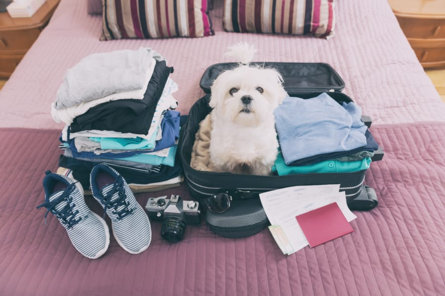 A dog sits patiently in a suitcase.