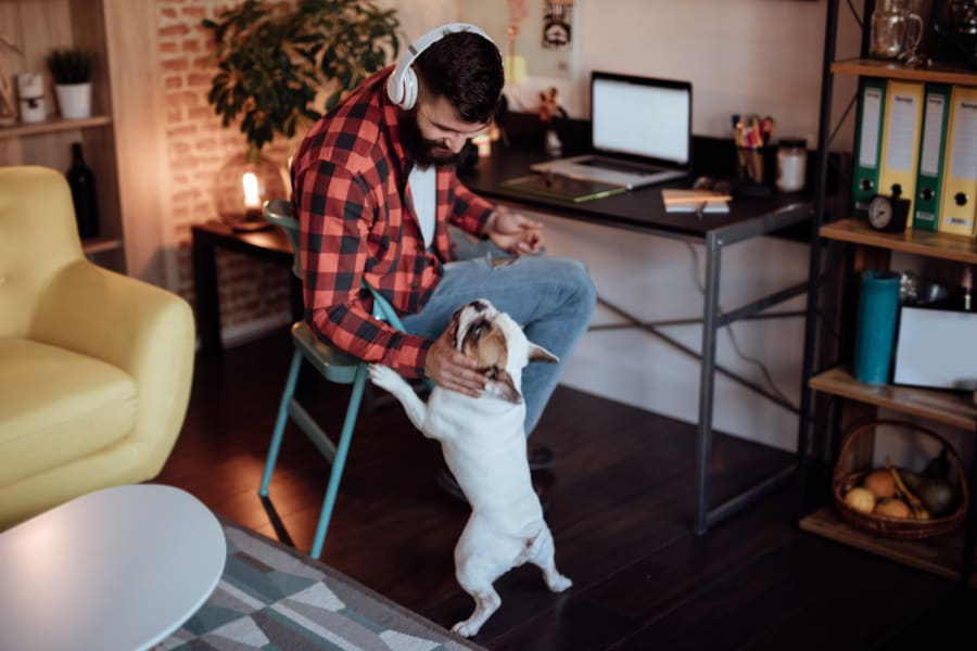 A man works from home and pets his dog