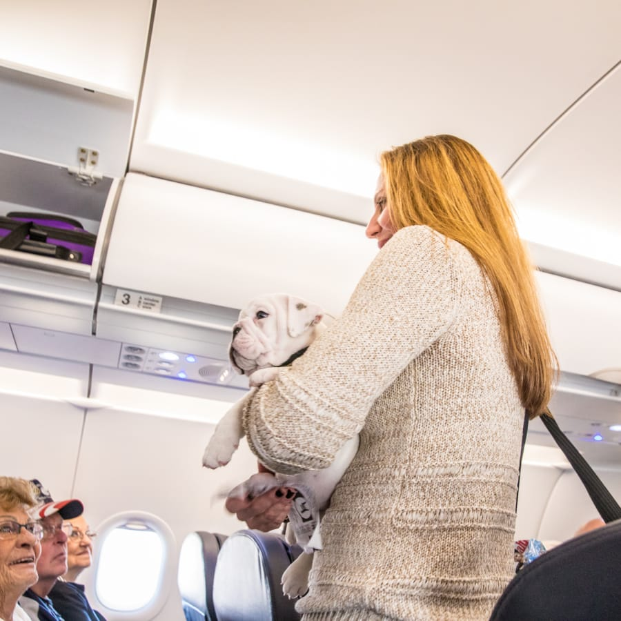 A woman takes her emotional support animal on a flight