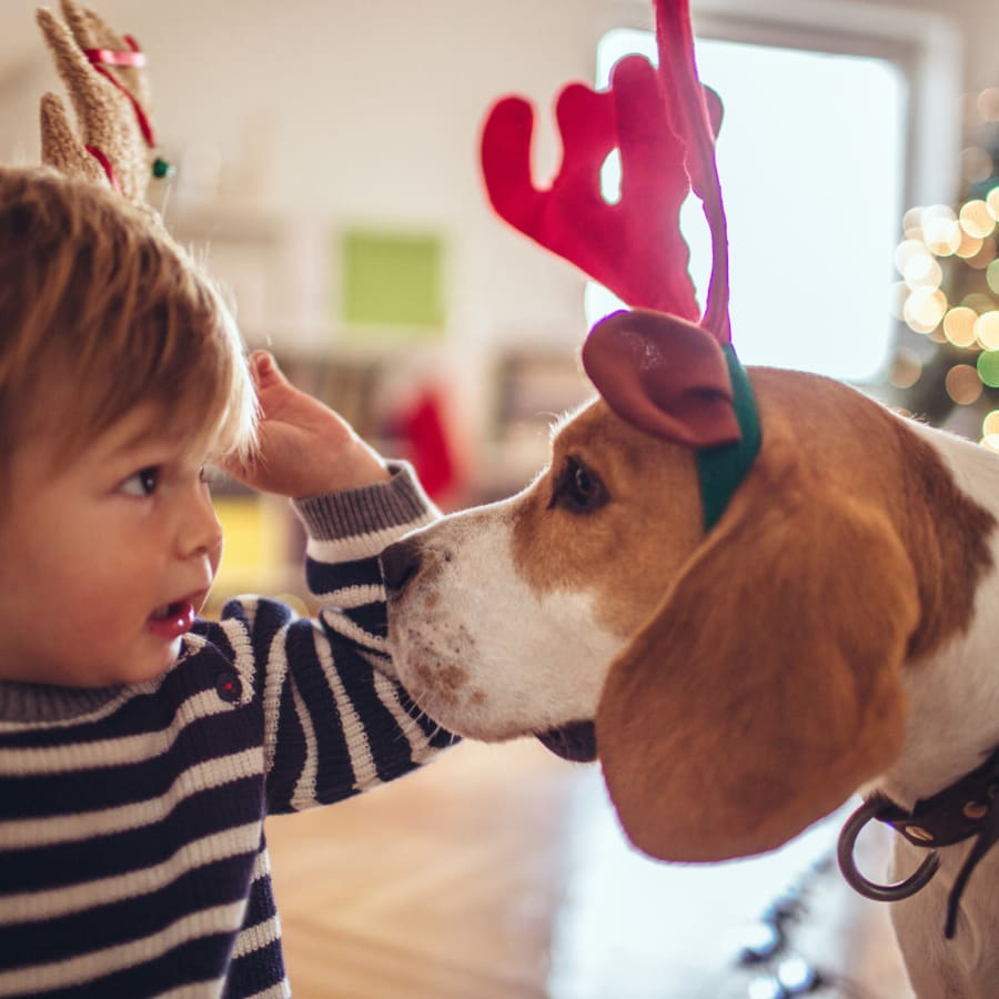 A toddler and a dog in festive headbands