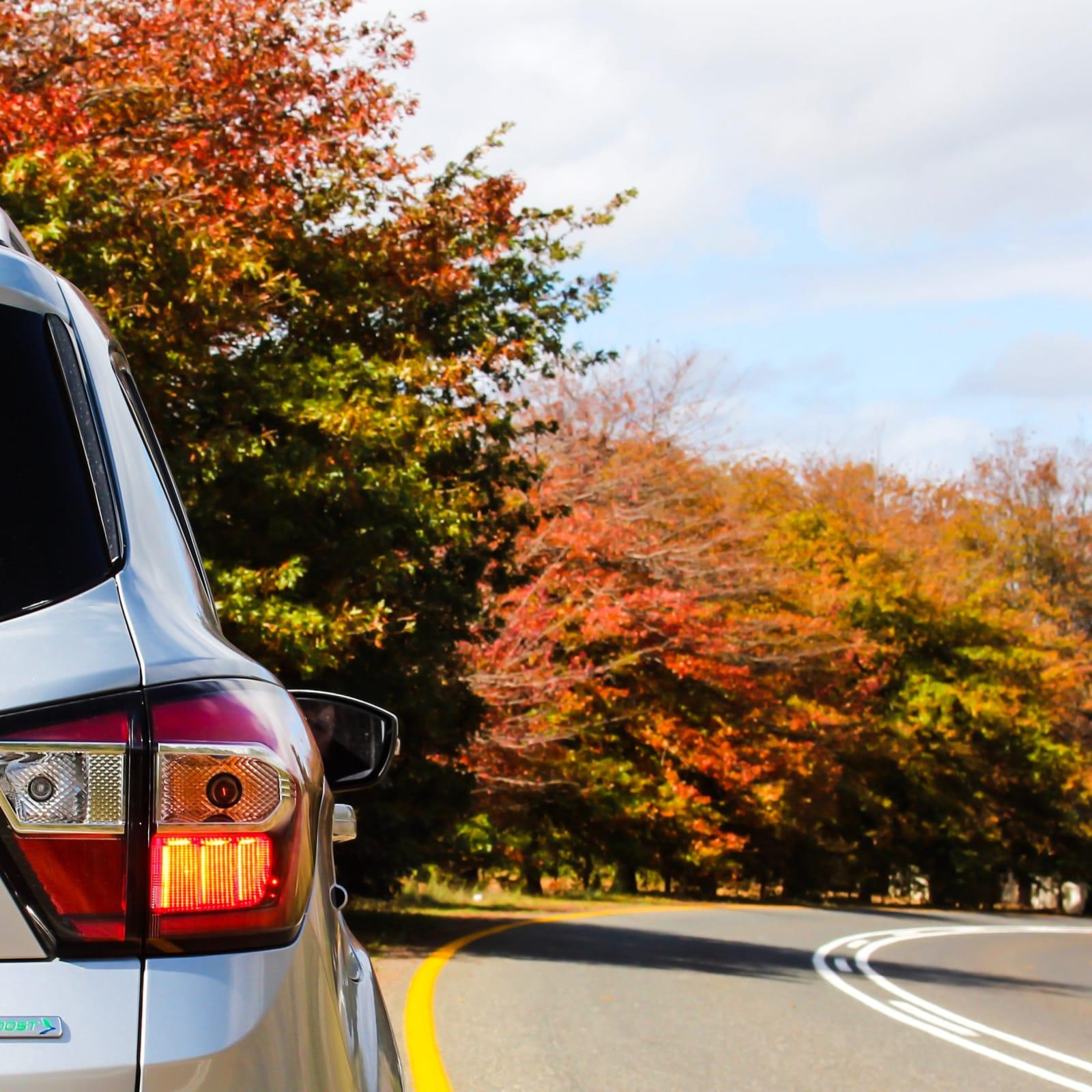 The Avis Preferred Car Rental Program Ultimate Guide 2019
