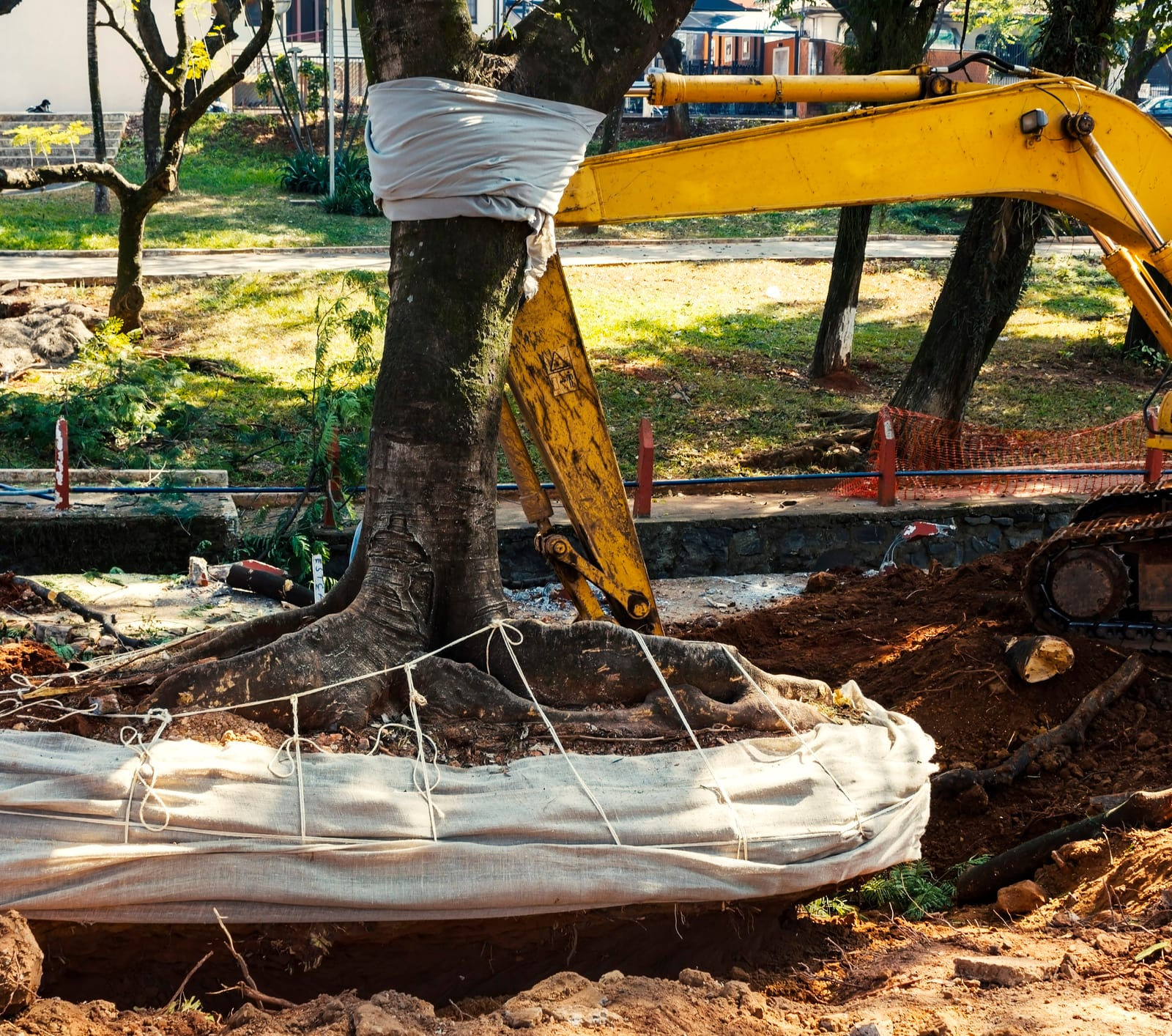 Does Homeowners Insurance Cover Tree Removal after a Storm