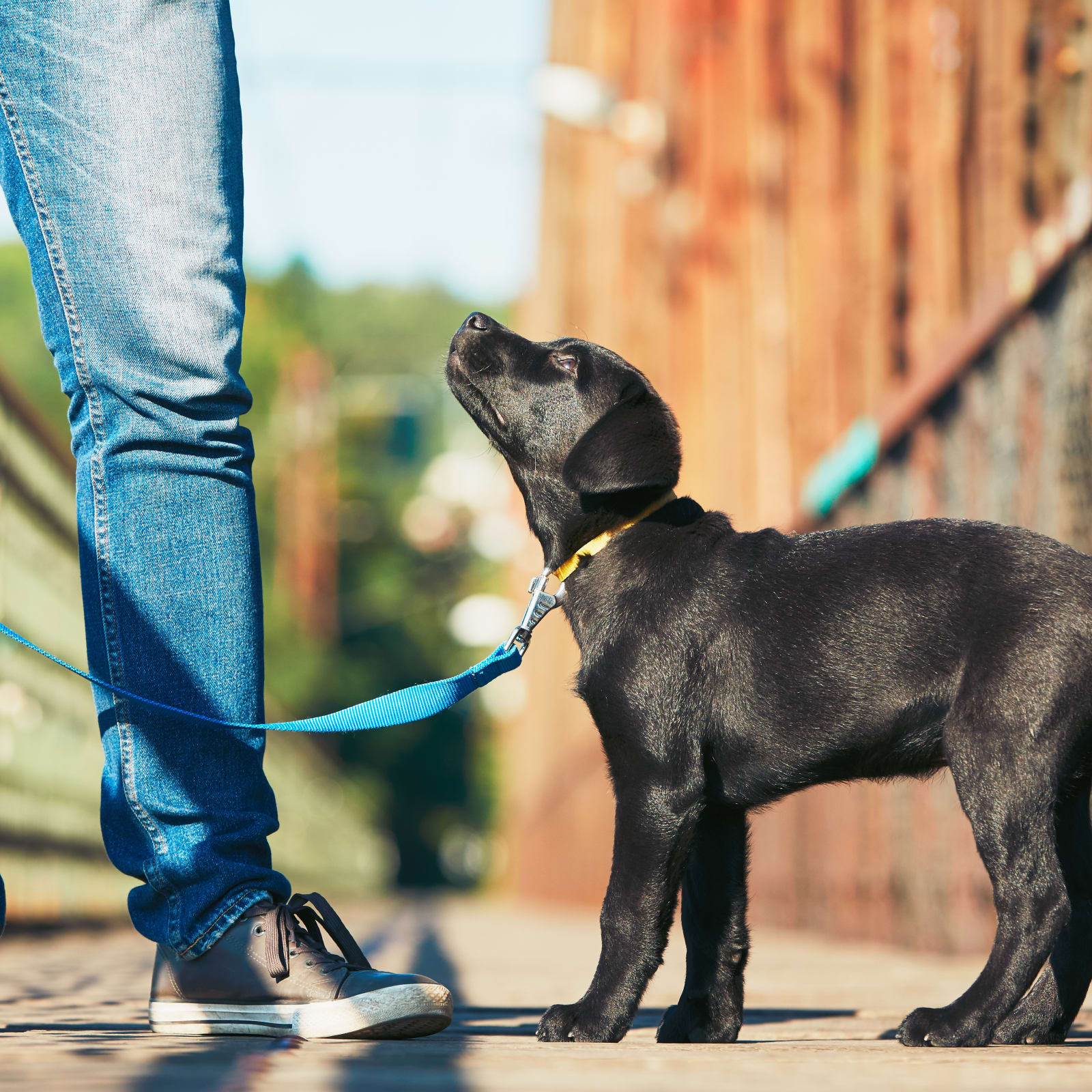 Average Cost of Pet Insurance: 2019 Facts and Figures