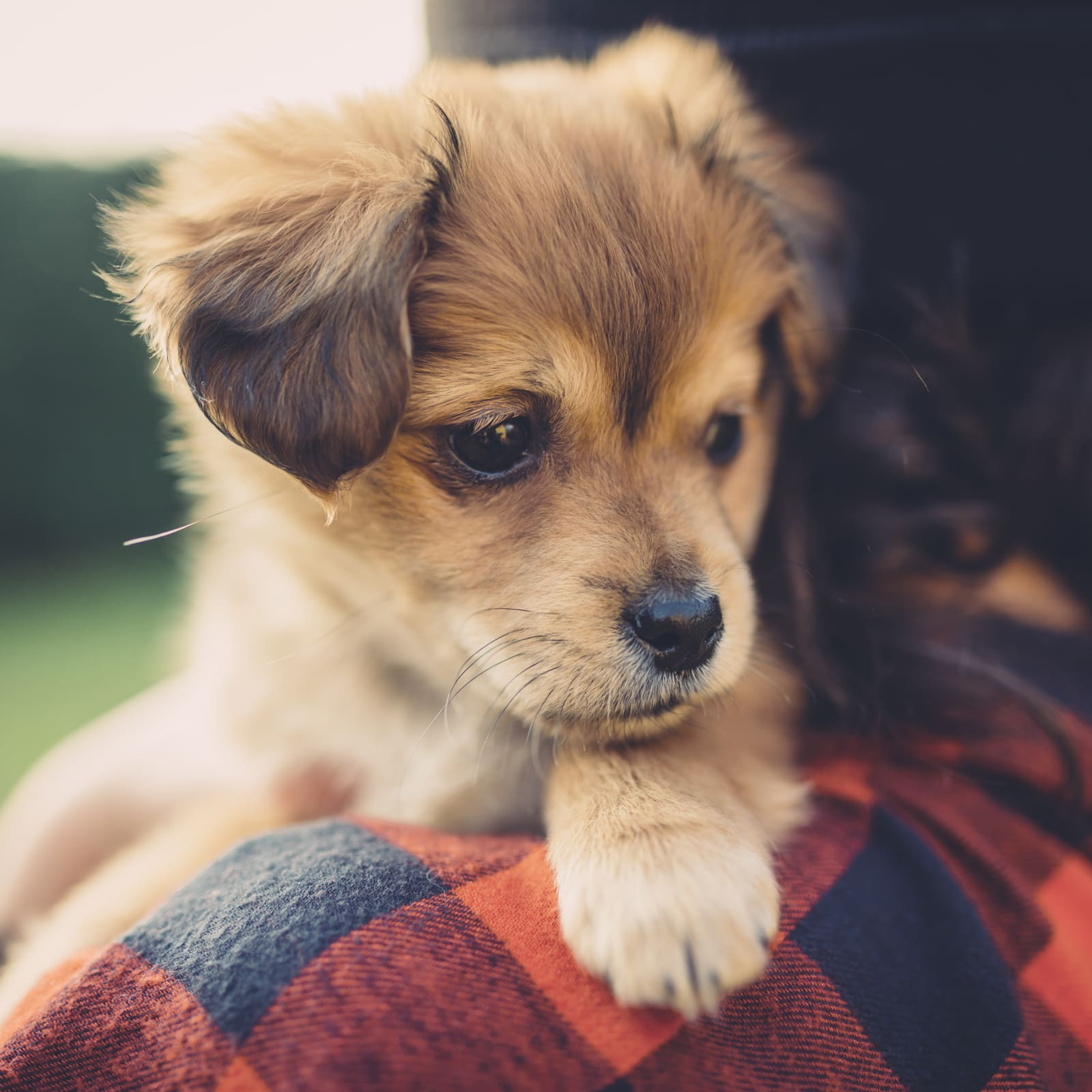 What Is Pet Insurance And How Does It Work Valuepenguin