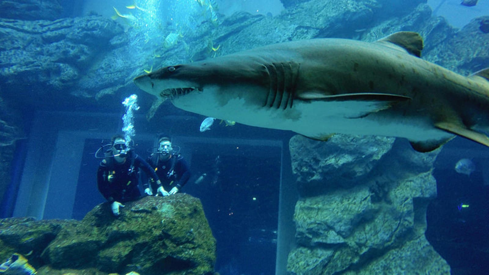 Swimming with sharks in Dubai