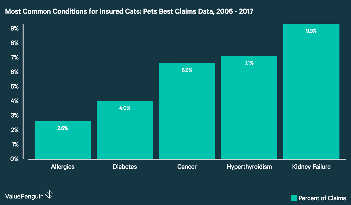 Graph showing common cat conditions that are covered by pet insurance