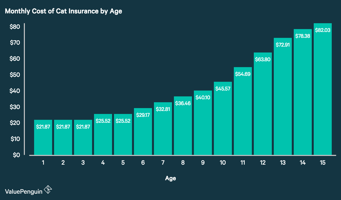 This graph shows how monthly premiums for cats can scale from age one to 15 years old