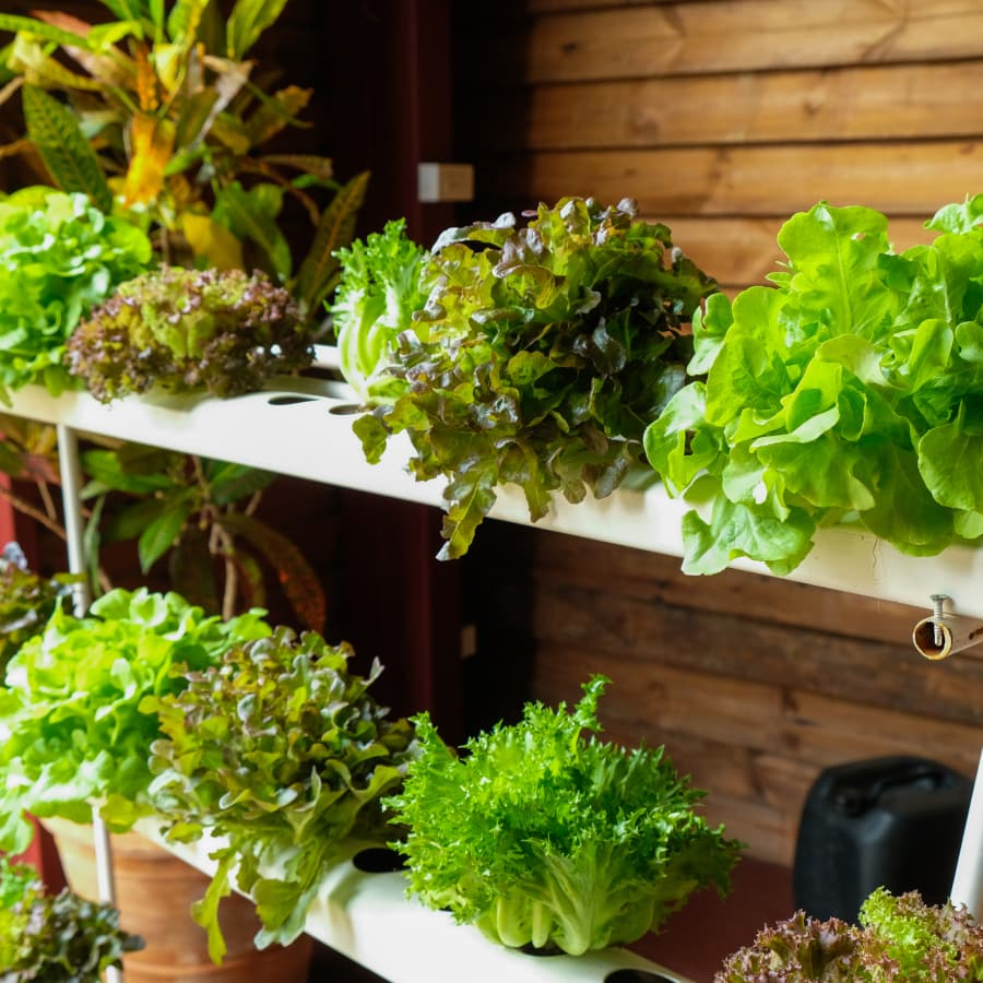 hydroponic farming at home
