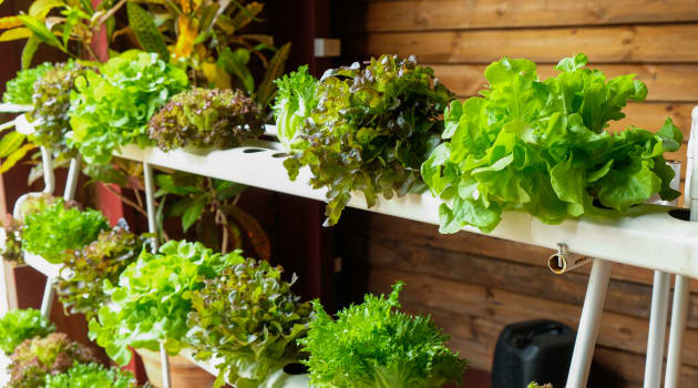 Hydroponic Farming at Home: How to Grow Safer, Better and Cheaper Food in Your HDB Flat