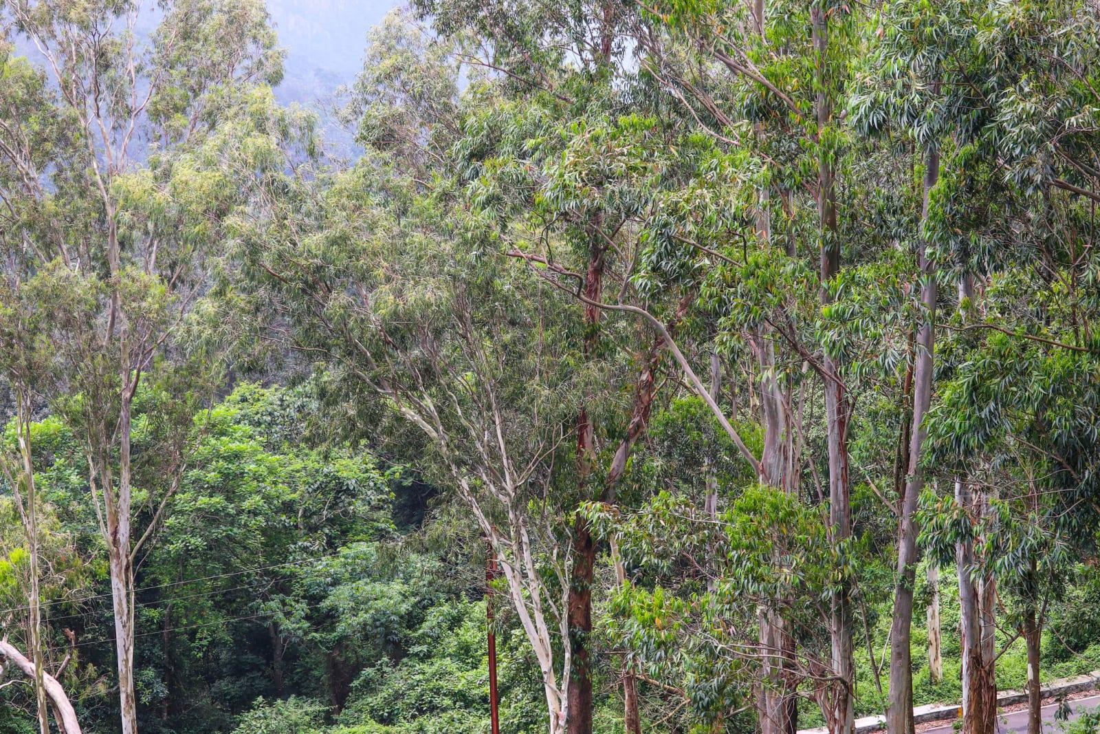 Trees in Yercaud