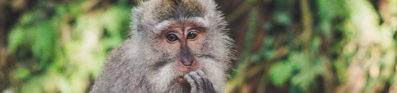 A monkey looking confused